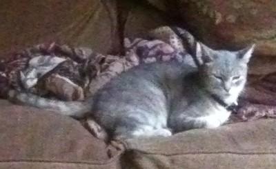 Pennycat