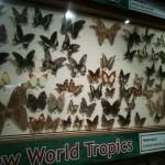 ButterflyPavilion_2012_11